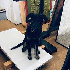 We dont have much to say at the moment other than ...Lk at our shop dog!!! Woof! #walkies #dogsofinstagram #screenprintingdog teaching her how to expose a screen. Progress is slow Screen Printing, In This Moment, Teaching, Studio, Dogs, Shop, Animals, Screen Printing Press, Animales