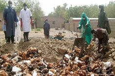 Bird Flu Kills 420 in Edo   Outbreak of Avian Influenza Virus, also known as Bird Flu, has been recorded in Edo State. The state Commissioner for Agriculture, Abdul Oroh, who confirmed the outbreak yesterday in Benin, said necessary steps of quarantine and decontamination have been instituted. - See more at: http://firstafricanews.ng/index.php?dbs=openlist&s=12795#sthash.J211iqZH.dpuf