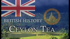 British History of Ceylon Tea (found on /r/documentaries) #tea #greentea #teatime #win #90sBabyFollowTrain