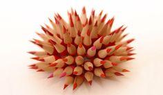 Red Urchin, Jennifer Maestre
