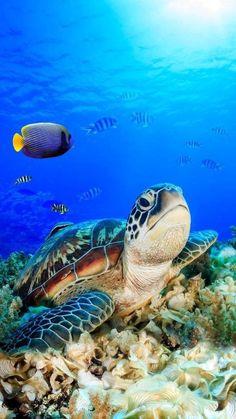 Sea Turtle Art, Baby Sea Turtles, Cute Turtles, Turtle Love, Ocean Turtle, Turtle Swimming, Underwater Animals, Underwater Creatures, Ocean Creatures