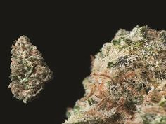 Blueberry - The 15 Best Weed Strains Right Now | Complex