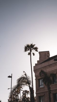 Ideas for palm tree wallpaper iphone los angeles