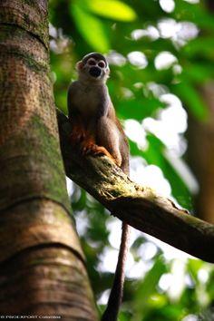 Isla de los Micos #amazonie #colombie