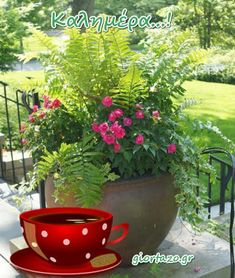 Good Morning Good Night, Plants, Sayings And Quotes, Plant, Planets