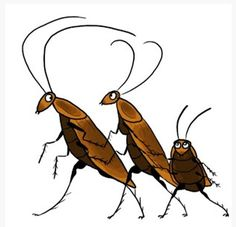 Can We Cooperate Like Cockroaches? Ace Exterminators