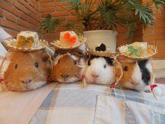 summer piggies