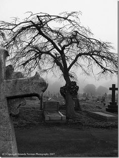 beautiful cemetery tree <3