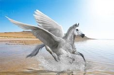 Shop for Diamond Painting Kits at Pretty Neat Creative with ✅ Softest canvas, Sparkliest beads ✅ Most durable package ✅ WARRANTY. Cute Fantasy Creatures, Mythical Creatures, Pegasus, Purple Flower Pictures, Unicorns, Horse Tattoo Design, Unicorn Pictures, Winged Horse, Unicorn Art