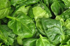 Spinach salad with walnut pesto dressing recipe, Listener – visit Eat Well for New Zealand recipes using local ingredients - Eat Well (formerly Bite) Walnut Pesto, Walnut Salad, Pesto Dressing, Dressing Recipe, Spinach And Feta, Spinach Salad, Most Filling Foods, Puerto Rico, Most Nutritious Vegetables