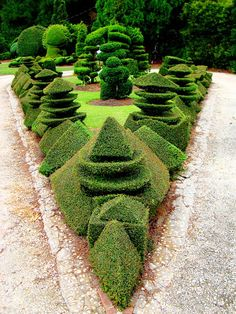 Topiary by Mr. Pearl Fryar, self-taught topiarist, at his home in Bishopville, South Carolina - photo form David Cobb Craig blog