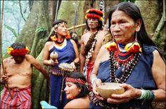 La forêt d'Amazonie : fiche pédagogique