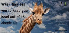 Tall order.. Under Construction, Giraffe, Told You So, Tasty, Clouds, Funny, Animals, Felt Giraffe, Animales