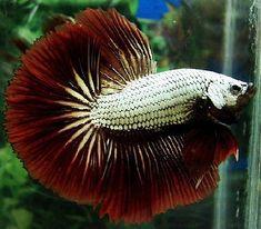 JOE'S AQUAWORLD FOR EXOTIC FISHES MUMBAI INDIA 9833898901: EXOTIC ...