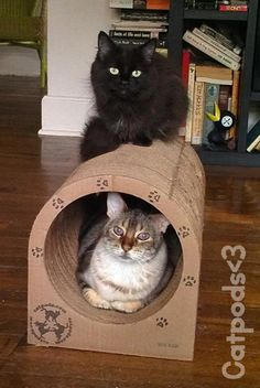 """Bruce and Adeline...Loving the Catpod everyday!"" - William M."