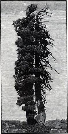 Beyond the Rain ~ Wood Engraving ~ Richard Wagener
