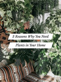 The best way to bring the outdoors in? Houseplants, of course. Indoor plants will purify your air, add beauty to your home, and reduce your stress levels. Plants make people happy. Read more about the Living Room Plants, House Plants Decor, Plant Decor, Large Plants, Faux Plants, Indoor Plants, Indoor Gardening, Ti Plant, Vertical Garden Wall