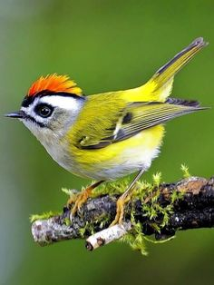Birds In The Sky, All Birds, Cute Birds, Pretty Birds, Little Birds, Most Beautiful Birds, Animals Beautiful, Exotic Birds, Colorful Birds