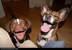 Laughs • from  APlaceToLoveDogs.com • dog dogs puppy puppies cute doggy doggies adorable funny fun silly
