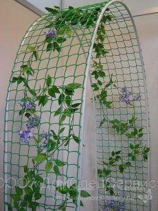 Garden decoration with jasmine the most popular climbing plant - New ideas