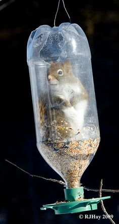 'Who? Me?' by Ron Hay  (photographer says not to worry - the squirrel wasn't stuck in there)