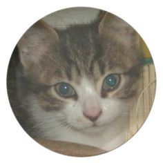 Kitten Smile Dinner Plate!  #cat #kitten #zazzle #store #gift #present #birthday #Christmas #cute #purr #meow http://www.zazzle.com/conquestkitty*