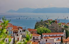 A sea full of sailing boats in Skopelos...  #skopelos #visitskopelos #apieceofyourheart #apieceofyourart #visitskopelosisland #skopelos_island #skopelosgreece #sporades #visitsporades #sporadesislands #greece #dive #weddings #honeymoon #hiking #ecology #beaches #greek #vacation #holidays #vacances #mamamia #travel #travelstyle #travellife #visitgreece #sailing Skopelos Greece, Ecology, Travel Style, Diving, Beaches, Boats, Greek, River, Sea
