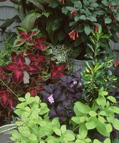 Great article about creating beautiful containers for shady spots.