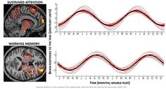 Seasonality in brain function