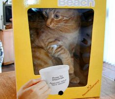 Your Cat Will Go Wild about These Homemade Toys