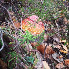 Mushroomtime
