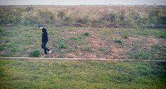Field. Grass. Vast. Reed