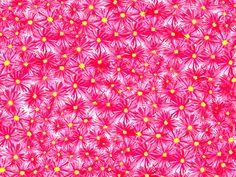 http://www.laet.com.br/site/files/gimgs/82_flor-palito.jpg