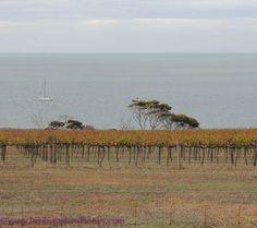 With a growing wine reputation, you won't have to look far for local refreshments on Kangaroo Island! Kangaroo Island, Australian Food, Lambs, Wine Recipes, Vineyard, Toast, That Look, Honey, Drop