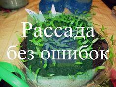 Рассада перца и баклажанов. Как избежать ошибок. (19.02.16 г.) | Видео на Запорожском портале Small Farm, Beautiful Gardens, Cucumber, Diy And Crafts, Soda, Vegetables, Green, Outdoor, Gardening