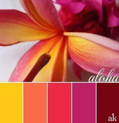 """Résultat de recherche d'images pour """"combo couleur"""""""