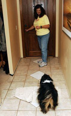 How to Keep Your Dog Calm When the Doorbell Rings - Karen Pryor Clicker Training Dog Clicker Training, Dog Training Tips, Training Plan, Training Schedule, Cesar Millan, Stop Dog Barking, Ring Doorbell, Dog Anxiety, Dog Hacks
