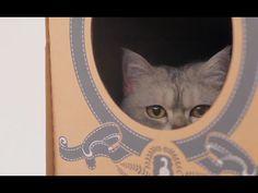 L'idée de l'année : la maison est en carton ... pirouette cacahuète | ARTE Creative