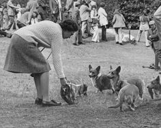 Queen Elizabeth and some Corgi pups
