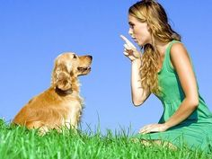 Find One of the Best Dog Behaviorists in Australia  If you are looking for best dog behaviorist in Australia, then visit Dog Owner Connection. We have some tricks for your dog behavior problem. http://www.dogownerconnection.com/dog-behavior-definition-dog-behaviorist/