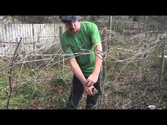 Video: How To Prune Your Grape Vines -It isn't all that hard. In fact, it's surprisingly easy. In this... -Posted  on January 29, 2014