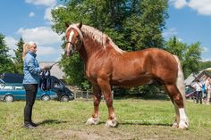 The Lithuanian Heavy Draught is a draft horse breed created in Lithuania during the 19th and 20th centuries. They are used mainly for heavy draft and farm work, as well as meat production and the improvement of other breeds. The breed is currently near extinction.