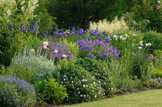 Iris sibirica `Blue King` (Sibirische lis), oriental poppy and others
