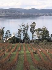 Winter pruning, Marion's Vineyard, Tamar Valley, Tasmania, Australia >>