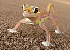 Desert Gecko (Namibia)  It is so cute!!! I want one!!