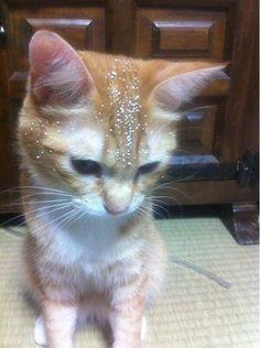 ビーズクッションを破壊後に何食わぬ顔で現れ、すぐに悪事がばれた猫がこちらです