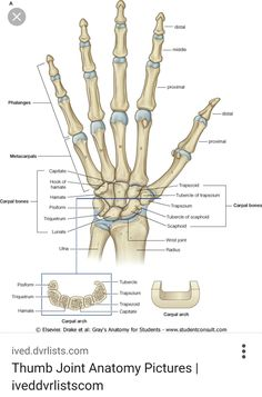 hand bone anatomy news information hand bones anatomy functions rh pinterest com