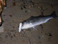 Striped-Bass Fishing