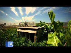 Helicicultura y Lombricultura JUNIN Y CARMEN DE ARECO - YouTube