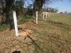 Animais silvestres morrem atropelados em rodovias de Bauru e Pederneiras